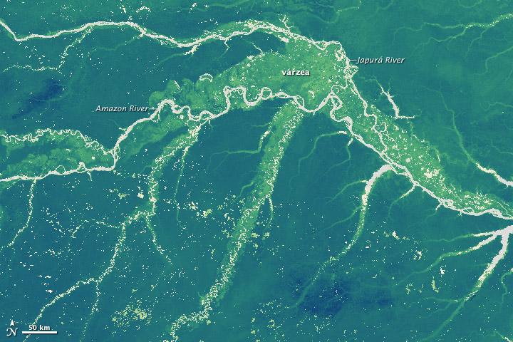 4 Mapas para entender el estado de Conservación de los Bosques en nuestro Planeta